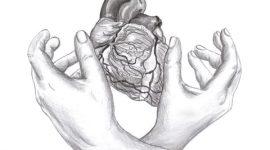 חלקיו השונים של הלב