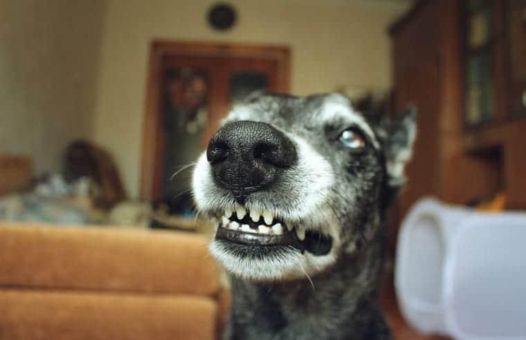 נשיכת כלב